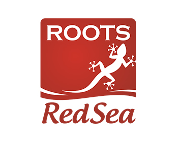Roots Red Sea logo design
